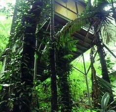 Daintree Eco Lodge And Spa - Accommodation VIC