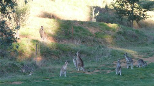 Karoonda Olive Grove Retreat At Mt Buffalo Olives - Accommodation VIC