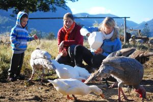 Cedar Glen Farmstay - Accommodation VIC