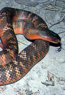 Armadale Reptile  Wildlife Centre - Accommodation VIC