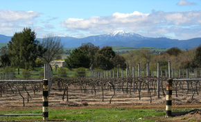 Buller View Wines - Accommodation VIC