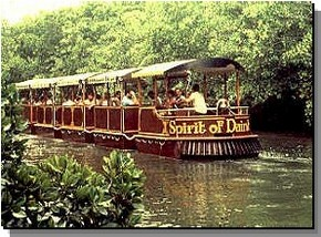 Daintree Rainforest River Trains - Accommodation VIC