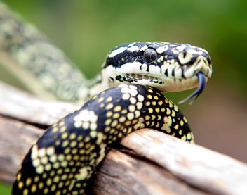 Reptile Encounters - Accommodation VIC