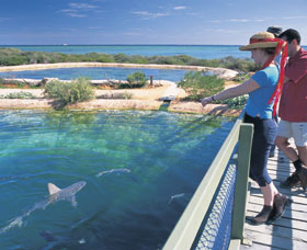 Shark Bay Marine Park - Accommodation VIC