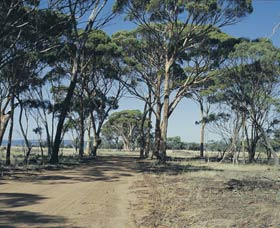 Lake Dumbleyung - Accommodation VIC