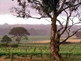 Yangarra Estate Vineyard - Accommodation VIC