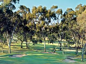Tanunda Pines Golf Club - Accommodation VIC