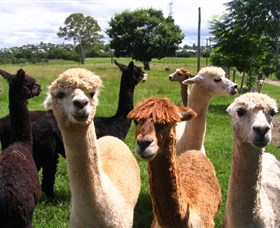 Banyandah Alpacas - Accommodation VIC