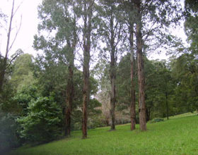 Mount Dandenong Arboretum - Accommodation VIC