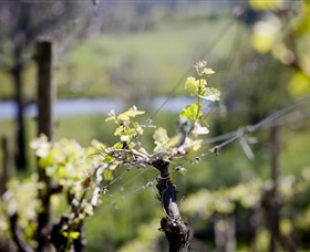 Mountainside Wines - Accommodation VIC