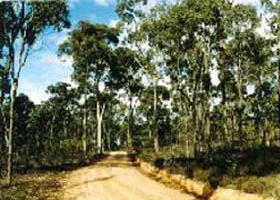 Paddys Ranges State Park - Accommodation VIC