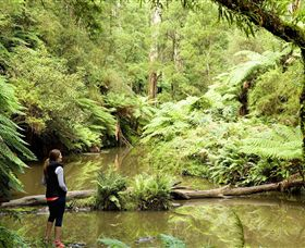 Morwell National Park - Accommodation VIC