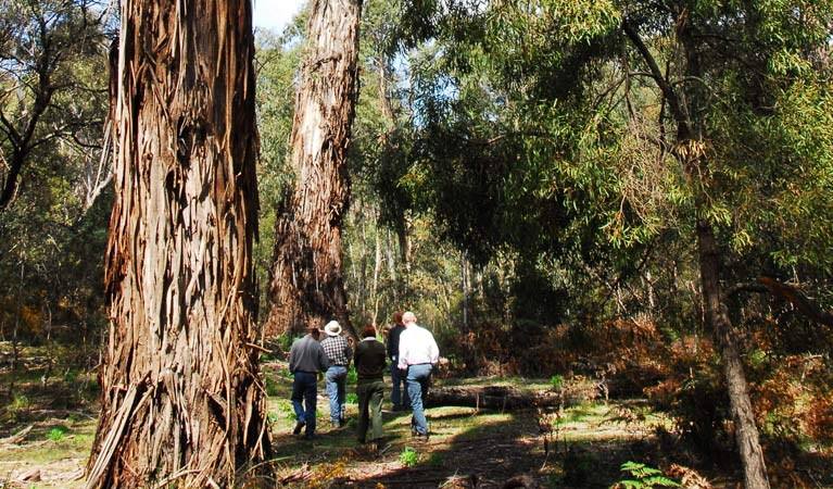 Tallaganda National Park - Accommodation VIC