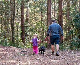 Olney State Forest - Watagan Mountains - Accommodation VIC