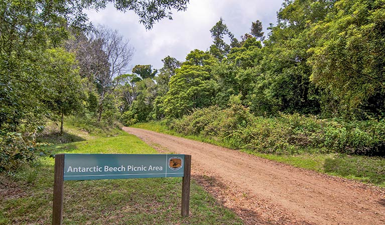 Antarctic Beech picnic area - Accommodation VIC