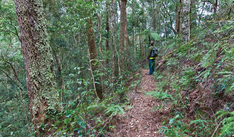 Blackbutt walking track - Accommodation VIC