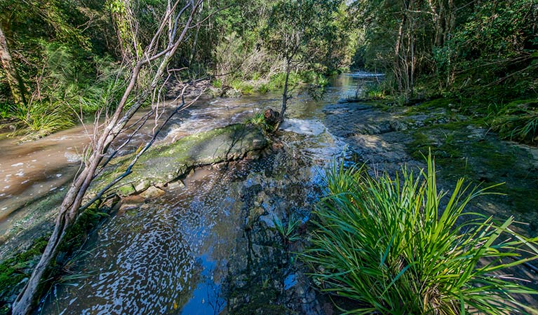 Dawson River walking track - Accommodation VIC