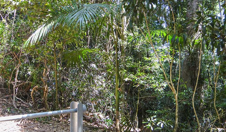 Goorgana walking track - Accommodation VIC
