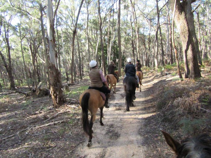 Silver Brumby Trails - Accommodation VIC