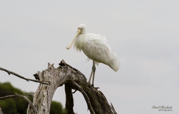 Melbourne Birding Tours - Accommodation VIC