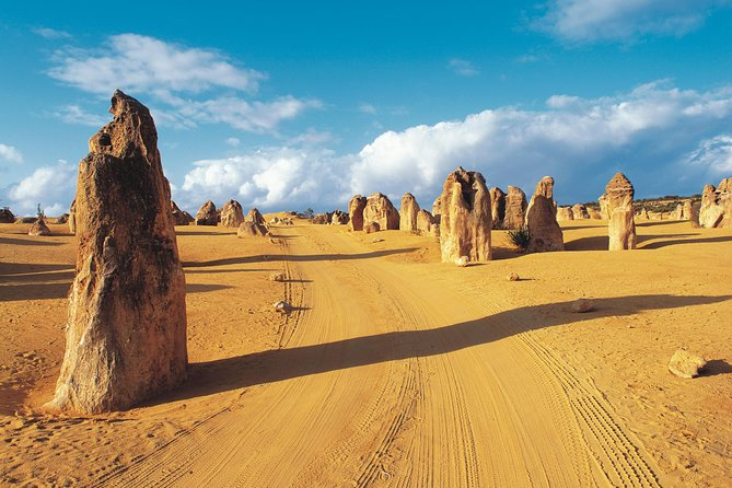 Pinnacles Desert Koalas and Sandboarding 4WD Day Tour from Perth - Accommodation VIC