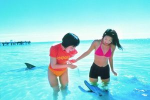 Monkey Mia Dolphins  Shark Bay Air Tour From Perth - Accommodation VIC