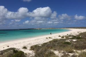 Abrolhos Island Half Day Fly and Flipper - Accommodation VIC