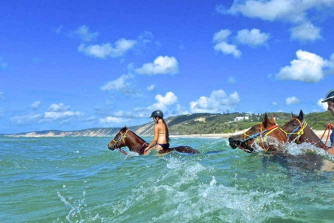 Horse Swimming Ride from Rainbow Beach - Accommodation VIC