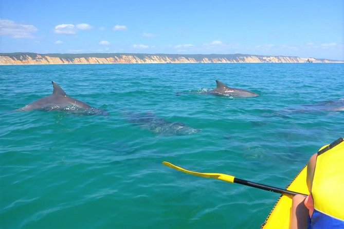 Half-Day Kayak with Dolphins and 4WD Beach Drive from Rainbow Beach - Accommodation VIC