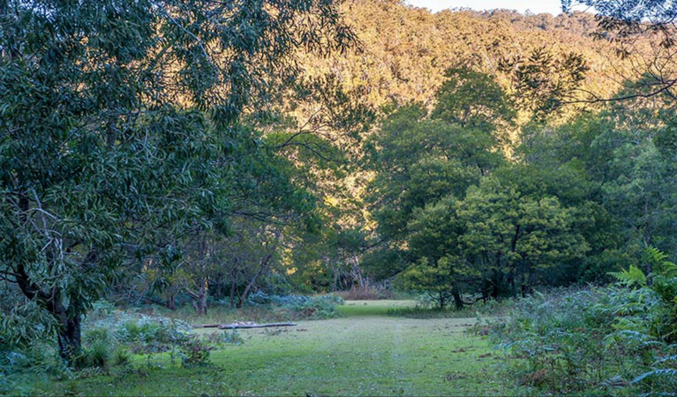 Griffins walking track - Accommodation VIC