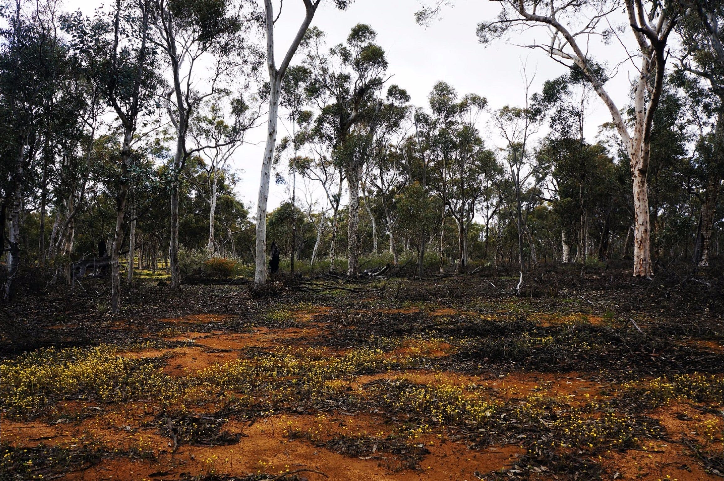 Woylie Walk Dryandra Woodland - Accommodation VIC