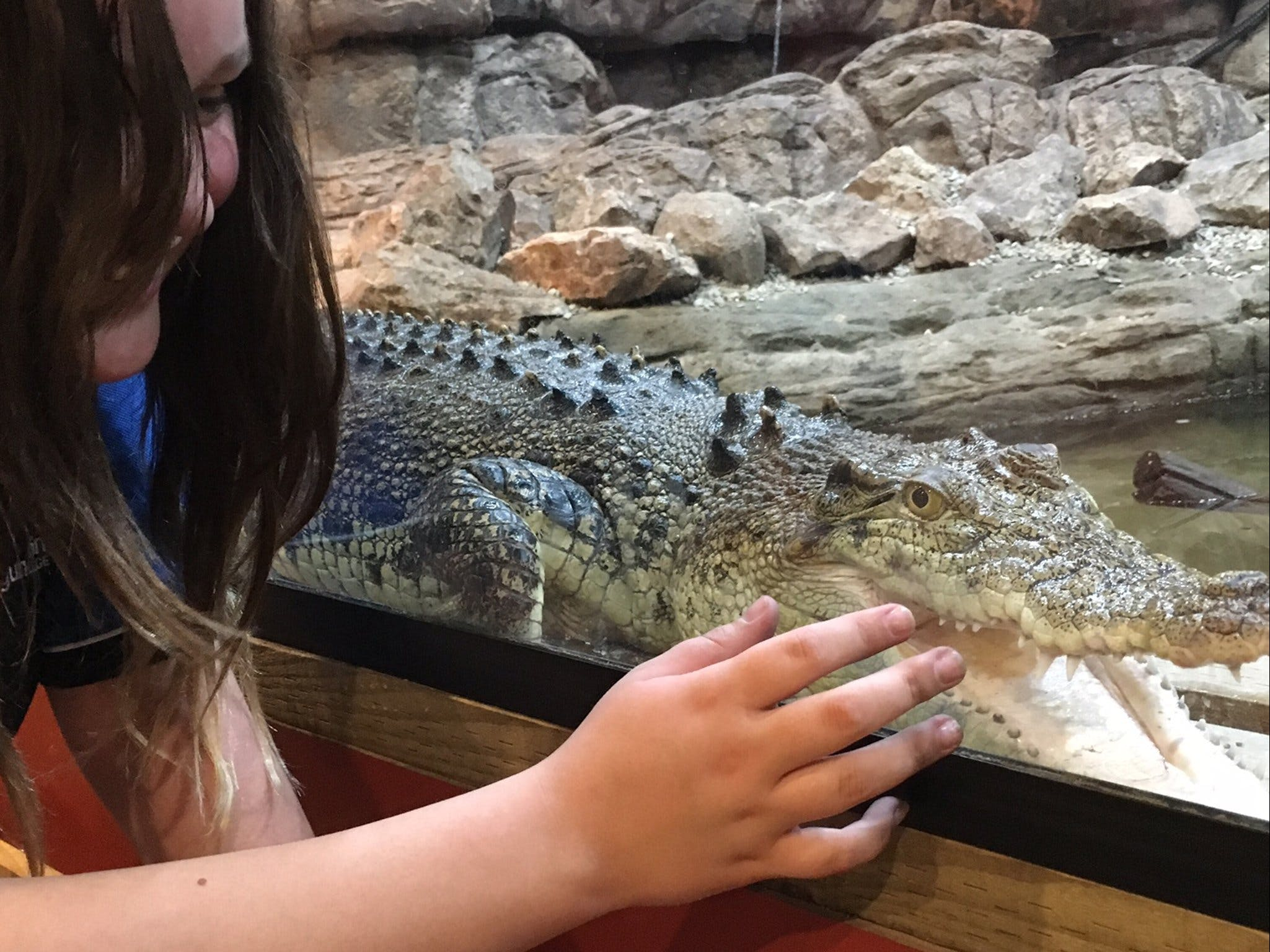 Canberra Reptile Zoo - Accommodation VIC