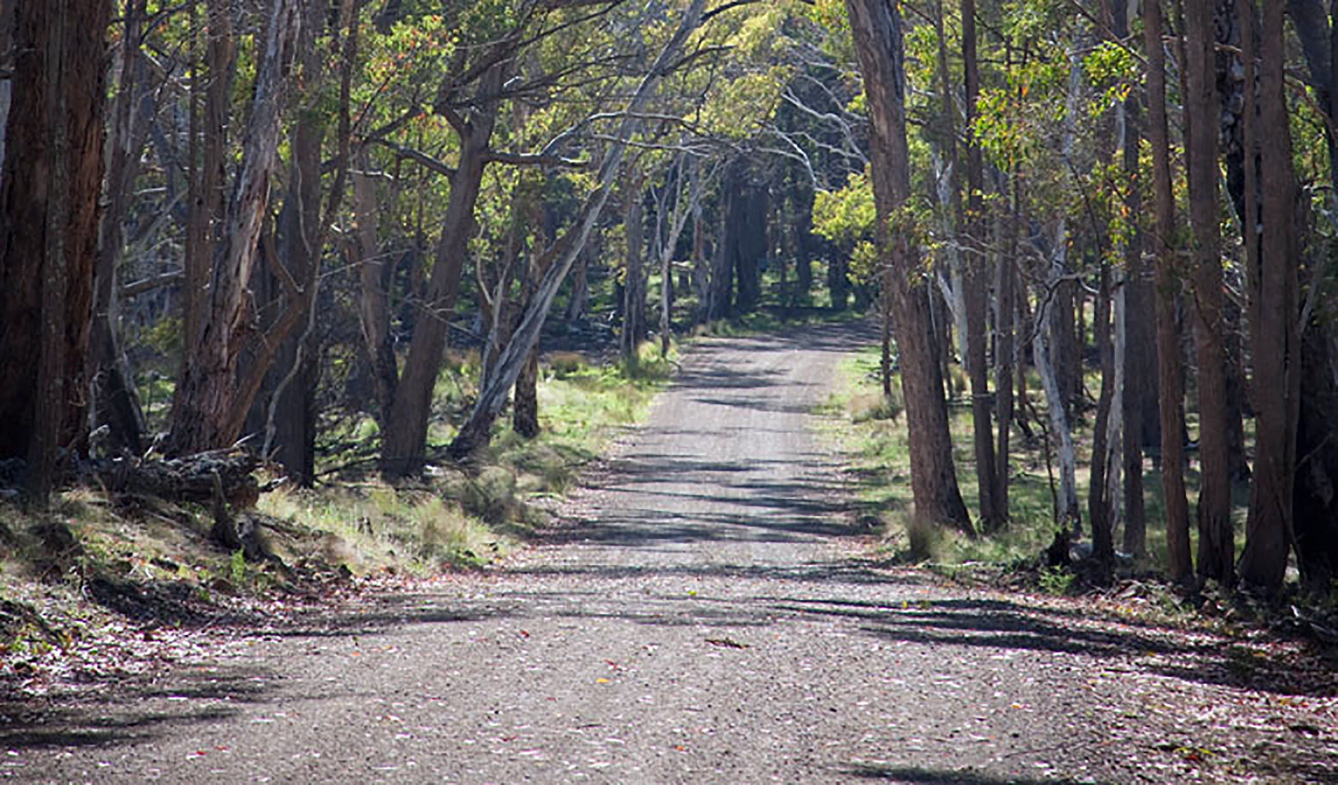 Coolah Tops National Park - Accommodation VIC