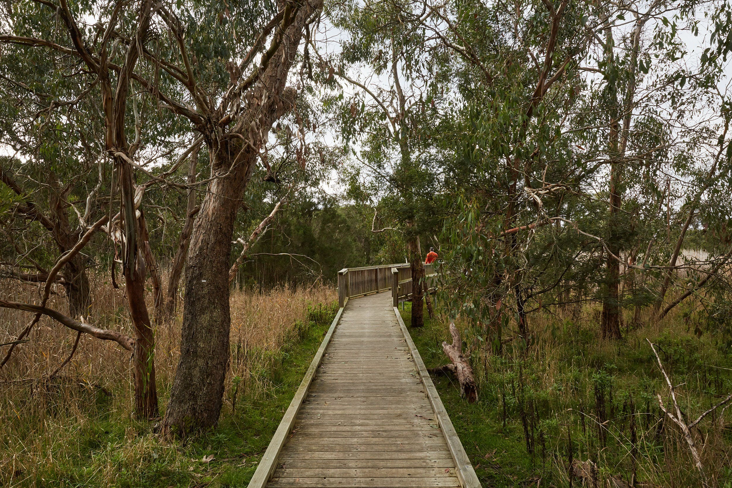 The Briars Park Walking Trails - Accommodation VIC