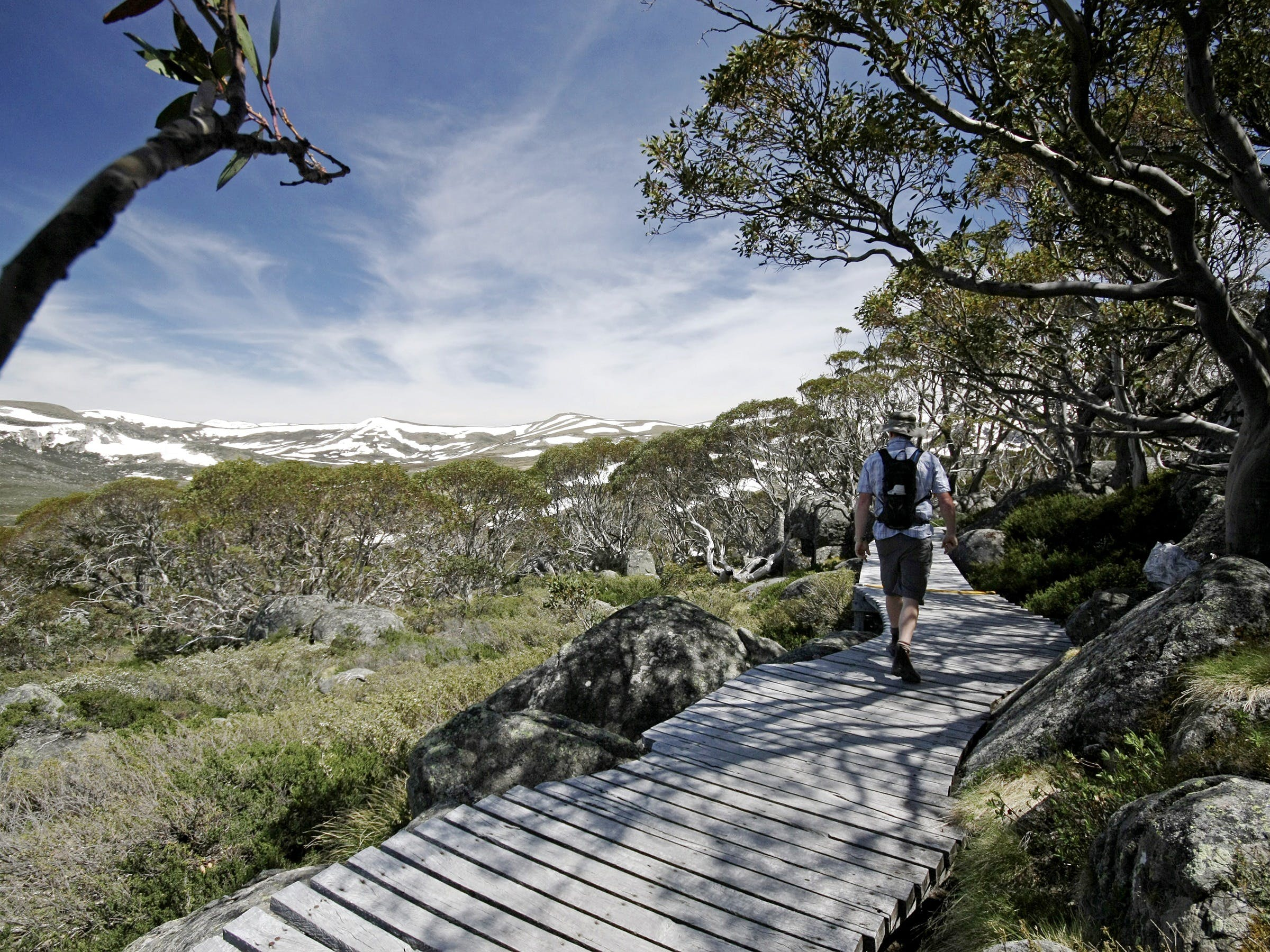 Snow Gums boardwalk - Accommodation VIC