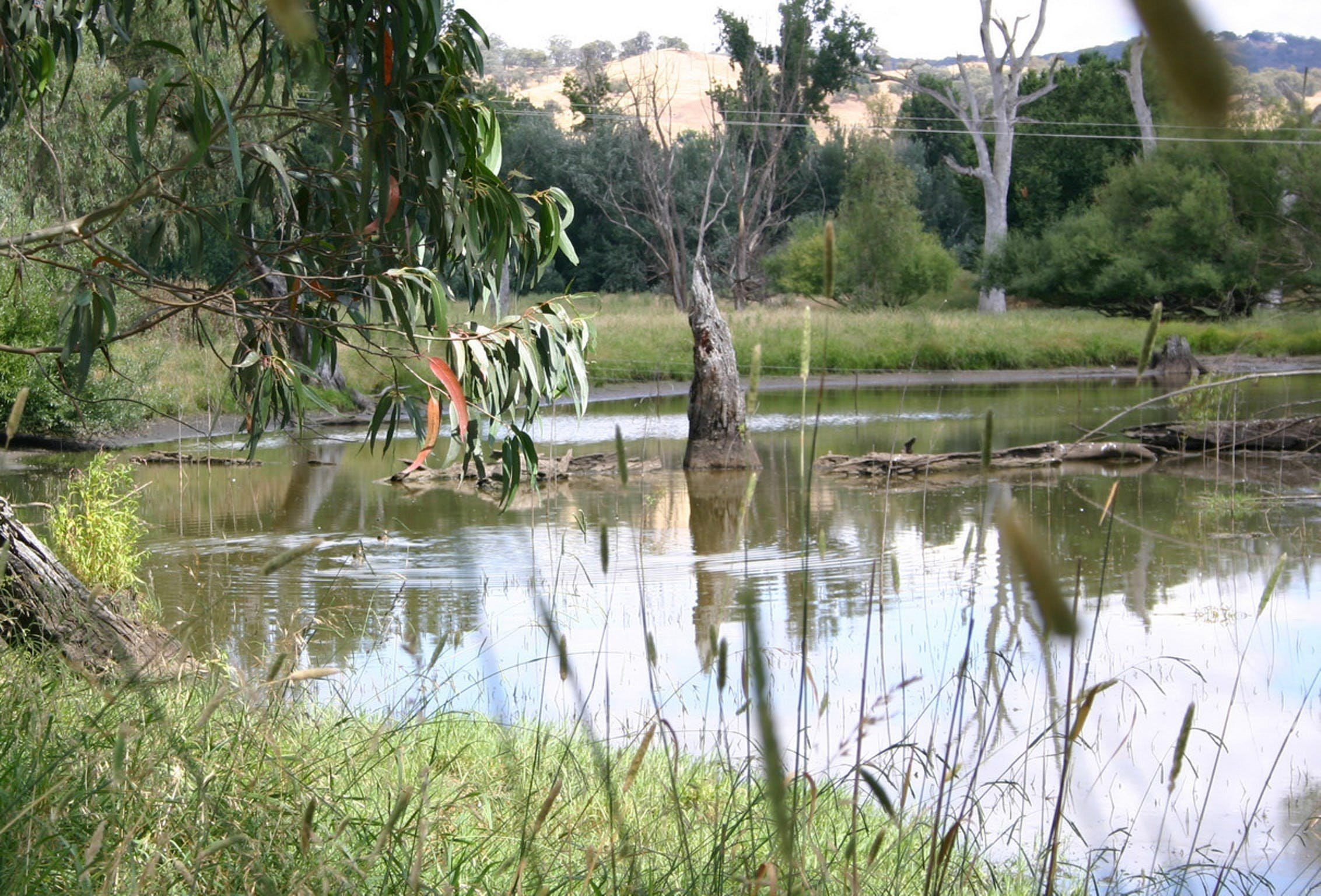 Tumut Wetlands - Accommodation VIC