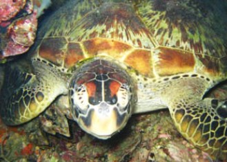 Adrenalin Snorkel and Dive - Accommodation VIC