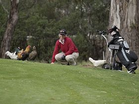 Tasmania Golf Club - The - Accommodation VIC