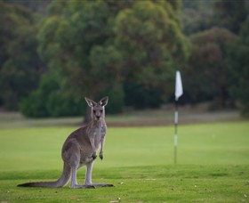 Anglesea Golf Club - Accommodation VIC