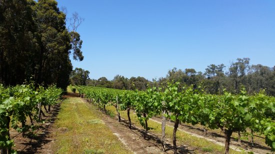 Stringybark Cottage Winery  Restaurant - Accommodation VIC
