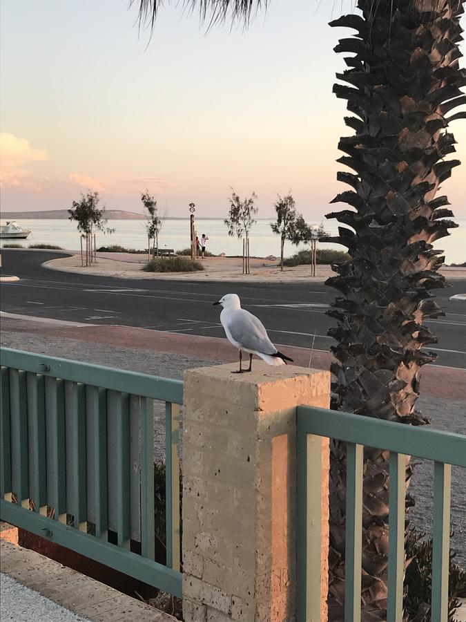 Shark Bay Seafront Apartments - Accommodation VIC